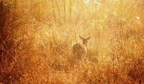 "Post image for A Perfect Poem? ""The Doe"" by C. K. Williams"